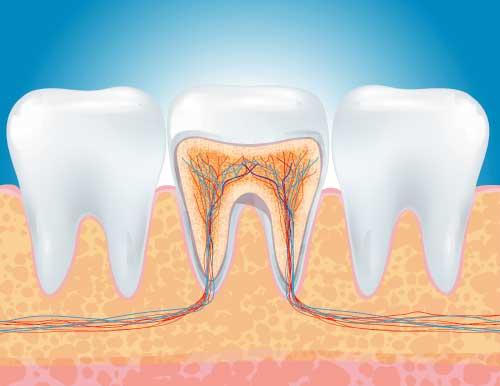 Endodonzia cos e come funziona.