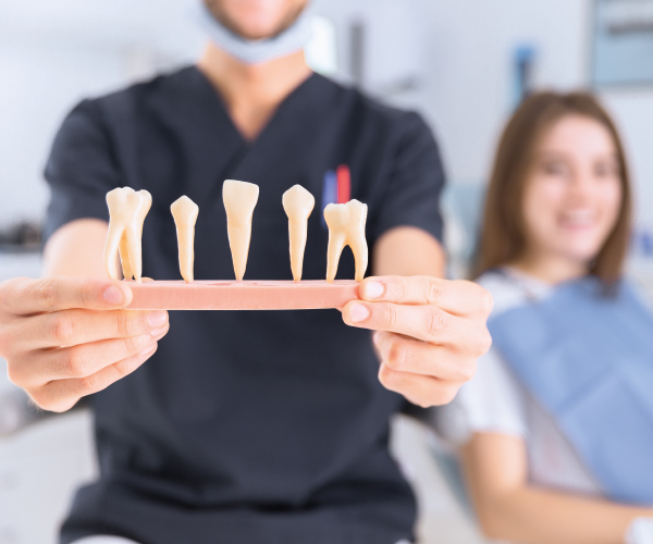 Dentista che mostra denti